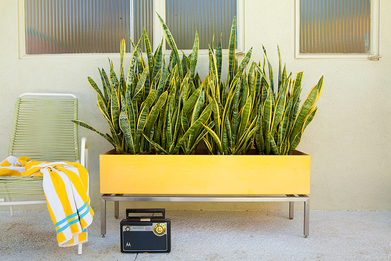 A bright yellow and rectangular planter with chrome legs is filled with snake plant outside of a house in Palm Springs. A vintage pool chair is beside it.