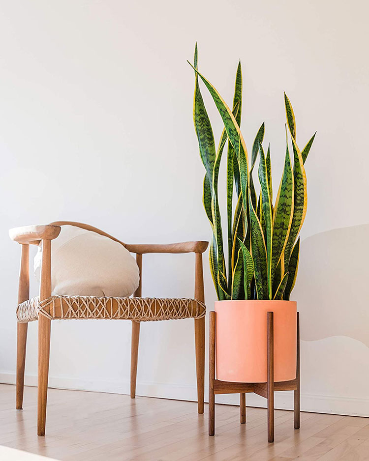 pink mid century modern plant stand with a walnut base