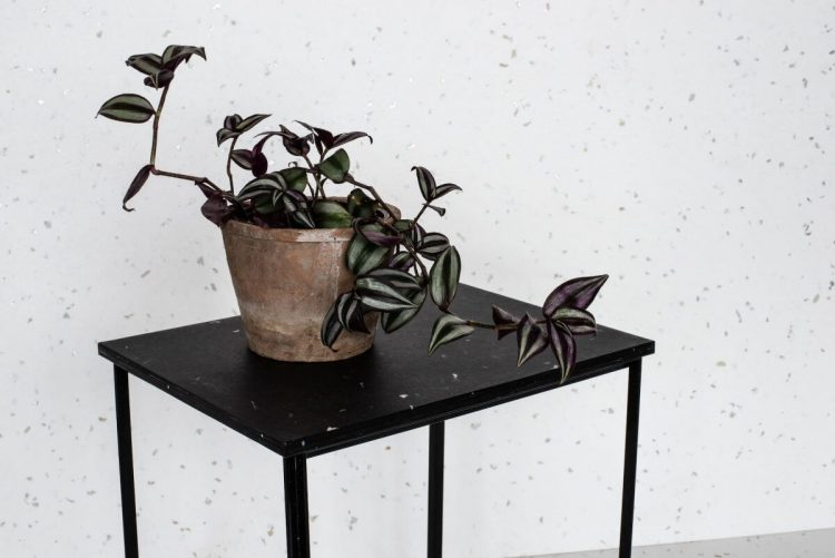 Plant on a table near a speckled white wall that is reminiscent of terrazzo tile.