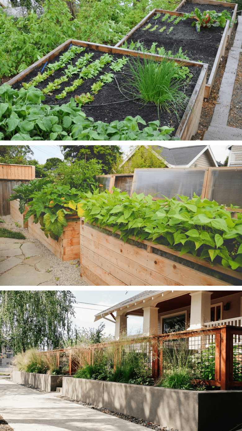 backyard modern vegetable garden