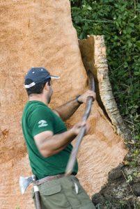 a worker harvesting cork bark from the cork oak to make cork flooring