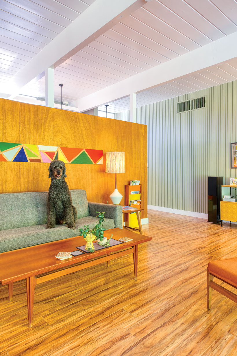 The owners' poodle sits on top of their living room's sage green sofa.