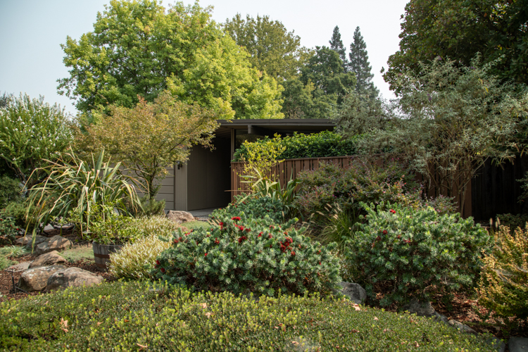 Overgrown landscaping hides a beautiful mid century home.