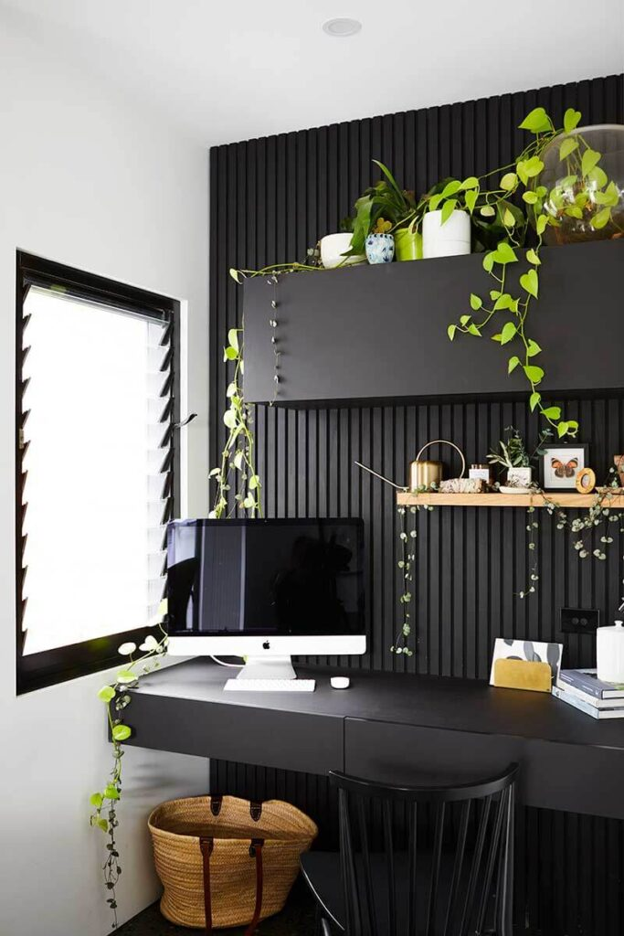 Home office with black accent wall, a black desk and vibrant hanging plants