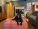 Black Dog on orange mid century modern ottoman